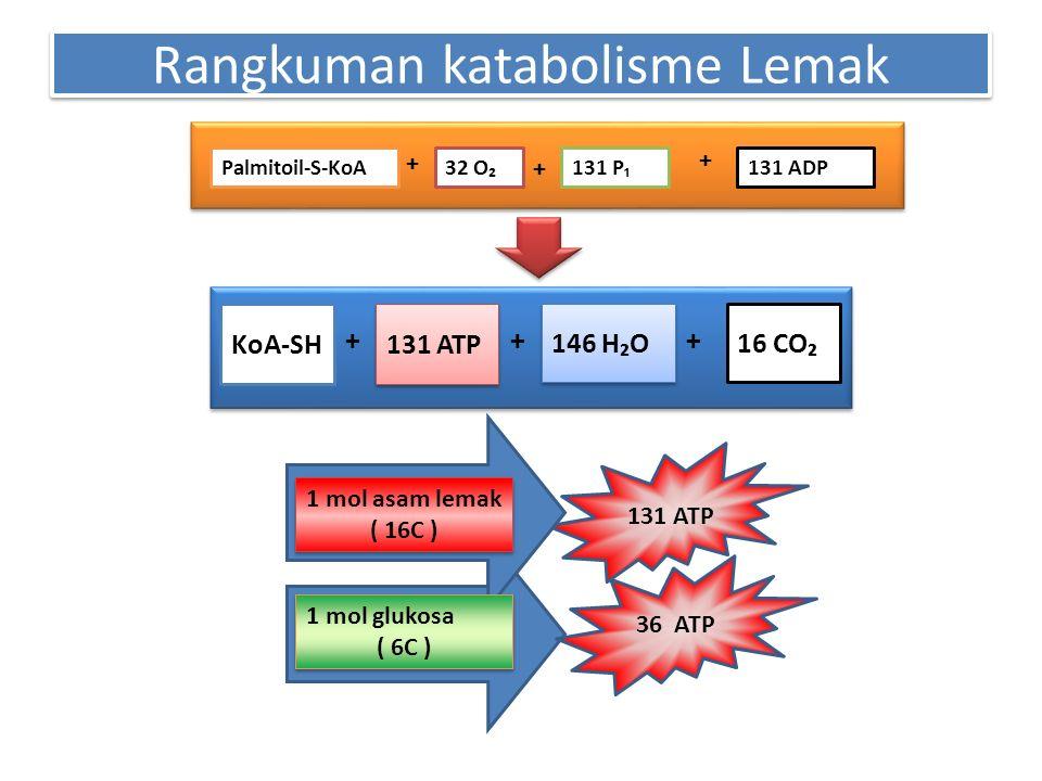 Rangkuman katabolisme Lemak 131 ADPPalmitoil-S-KoA32 O₂131 P₁ + + + KoA-SH 131 ATP 146 H₂O 16 CO₂ +++ 1 mol asam lemak ( 16C ) 1 mol asam lemak ( 16C