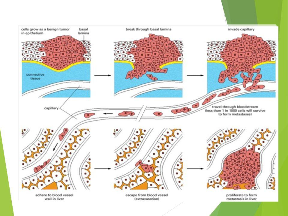 ANTI p 53 Antibodi P53 adalah protein tumor suppressor yang diproduksi gene p53.