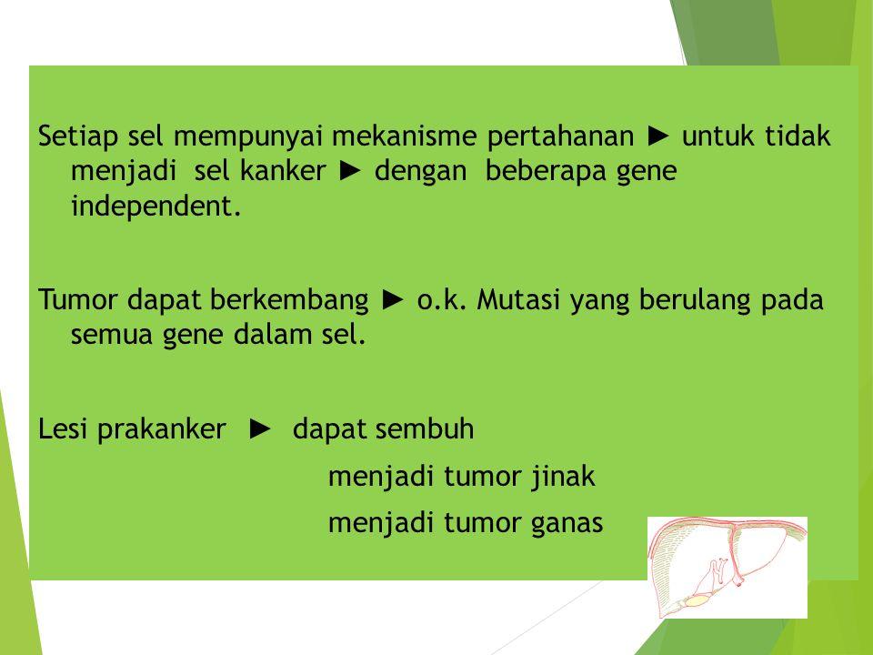 Setiap sel mempunyai mekanisme pertahanan ► untuk tidak menjadi sel kanker ► dengan beberapa gene independent. Tumor dapat berkembang ► o.k. Mutasi ya
