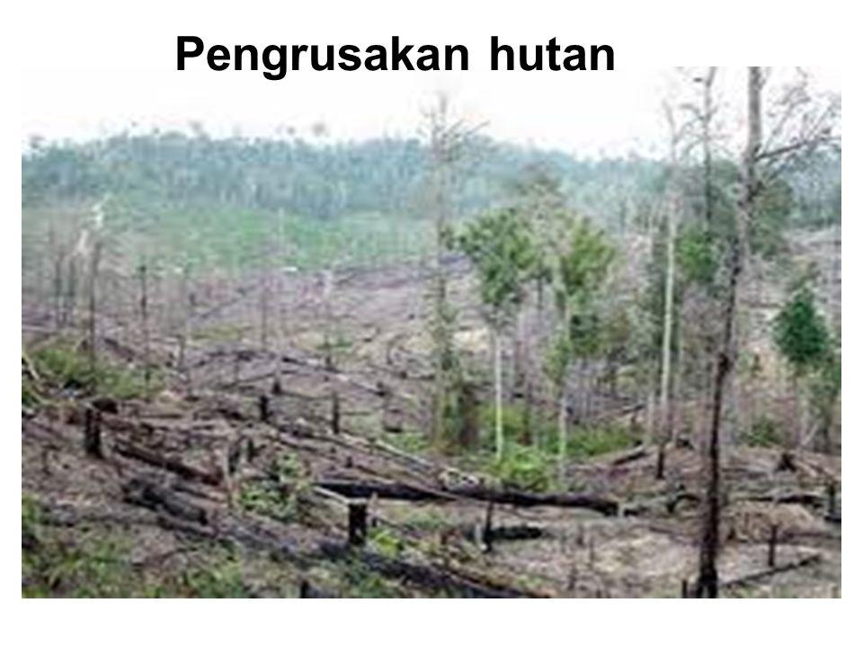 Kerusakan Hutan MANGROVE 1 Indonesia : 17.504 pulau Panjang Pantai : 95.181 km 2 Hutan mangrove terluas : 9,36 jt ha 75 % Asteng, 27 % Mangrove dunia 3 48 % = 4,51 jt Ha - Rusak Sedang 23 % = 2,15 jt Ha - Rusak Berat 4 Kerusakan mangrove di Jawa Barat & Banten sebesar : 20.400 Ha, Aceh : 50.000 Ha, Kaltim : 150.000 Ha, Irian : 2.934.000 Ha
