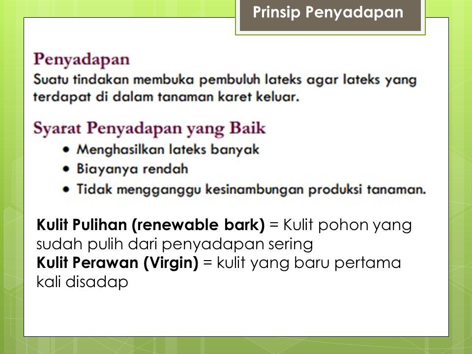 Prinsip Penyadapan Kulit Pulihan (renewable bark) = Kulit pohon yang sudah pulih dari penyadapan sering Kulit Perawan (Virgin) = kulit yang baru pertama kali disadap