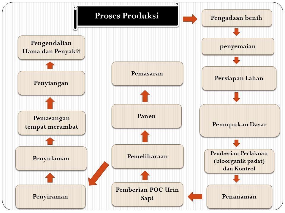 Proses Produksi Pengadaan benih penyemaian Persiapan Lahan Pemupukan Dasar Pemberian Perlakuan (bioorganik padat) dan Kontrol Penanaman Pemeliharaan Panen Pemasaran Penyiraman Penyulaman Pemasangan tempat merambat Penyiangan Pengendalian Hama dan Penyakit Pemberian POC Urin Sapi