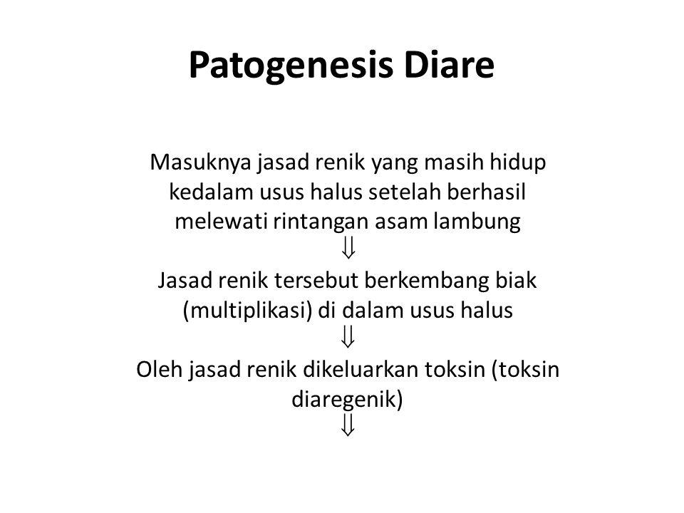 Patogenesis Diare Masuknya jasad renik yang masih hidup kedalam usus halus setelah berhasil melewati rintangan asam lambung  Jasad renik tersebut ber