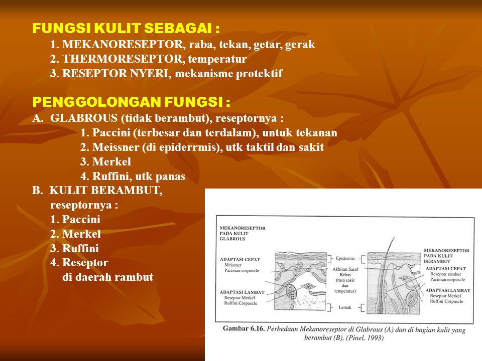 FUNGSI KULIT SEBAGAI : 1. MEKANORESEPTOR, raba, tekan, getar, gerak 2. THERMORESEPTOR, temperatur 3. RESEPTOR NYERI, mekanisme protektif PENGGOLONGAN