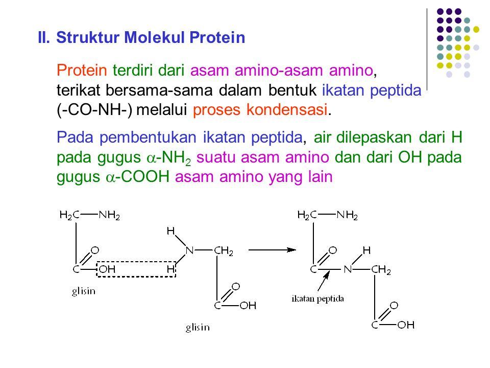 II.Struktur Molekul Protein Protein terdiri dari asam amino-asam amino, terikat bersama-sama dalam bentuk ikatan peptida (-CO-NH-) melalui proses kondensasi.