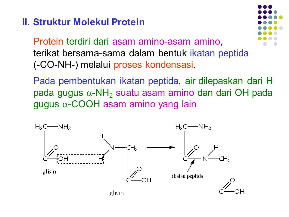 II.Struktur Molekul Protein Protein terdiri dari asam amino-asam amino, terikat bersama-sama dalam bentuk ikatan peptida (-CO-NH-) melalui proses kond