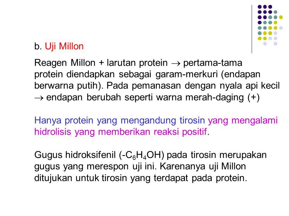 b. Uji Millon Reagen Millon + larutan protein  pertama-tama protein diendapkan sebagai garam-merkuri (endapan berwarna putih). Pada pemanasan dengan