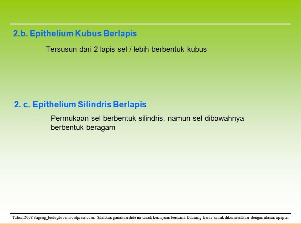 Tahun 2008 Sugeng_biologilover.wordpress.com. Silahkan gunakan slide ini untuk kemajuan bersama. Dilarang keras untuk dikomersilkan dengan alasan apap
