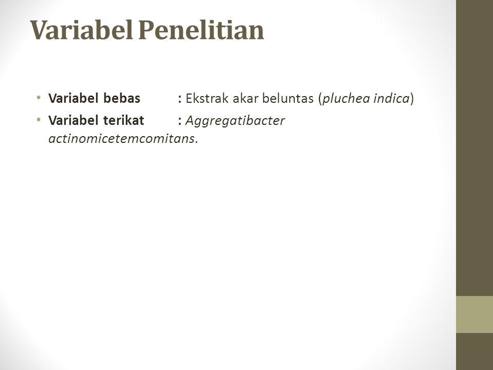 Variabel Penelitian Variabel bebas: Ekstrak akar beluntas (pluchea indica) Variabel terikat: Aggregatibacter actinomicetemcomitans.