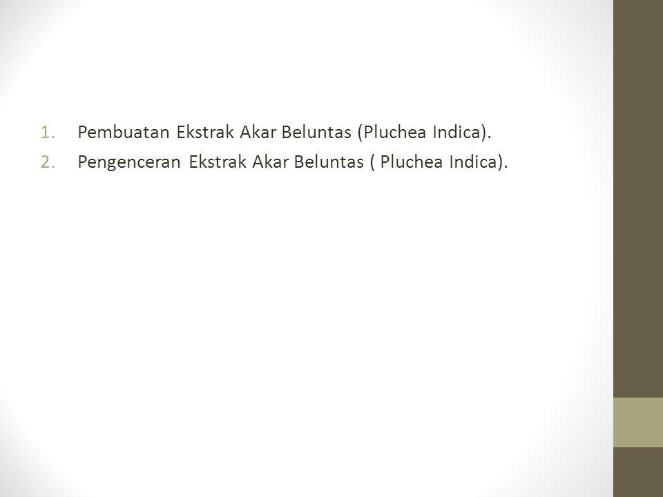 1.Pembuatan Ekstrak Akar Beluntas (Pluchea Indica).