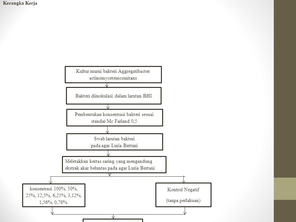 Kultur murni bakteri Aggregatibacter actinomycetemcomitans Bakteri diinokulasi dalam larutan BHI Swab larutan bakteri pada agar Luria Bertani Pembentukan konsentrasi bakteri sesuai standar Mc Farland 0,5 Meletakkan kertas saring yang mengandung ekstrak akar beluntas pada agar Luria Bertani Pengukuran zona hambat dengan jangka sorong Analisis data Inkubasi selama 3x24 jam konsentrasi 100%, 50%, 25%, 12,5%, 6,25%, 3,12%, 1,56%, 0,78%.
