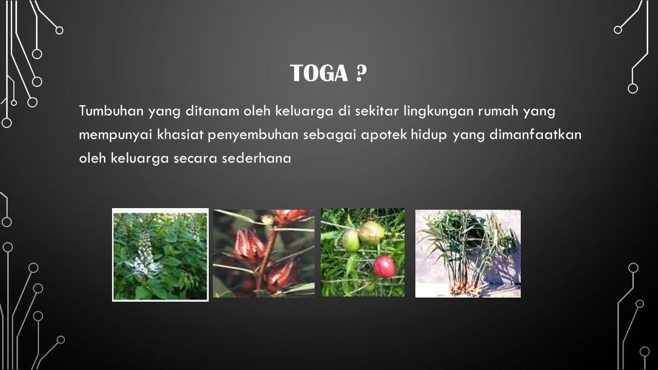 TOGA ? Tumbuhan yang ditanam oleh keluarga di sekitar lingkungan rumah yang mempunyai khasiat penyembuhan sebagai apotek hidup yang dimanfaatkan oleh