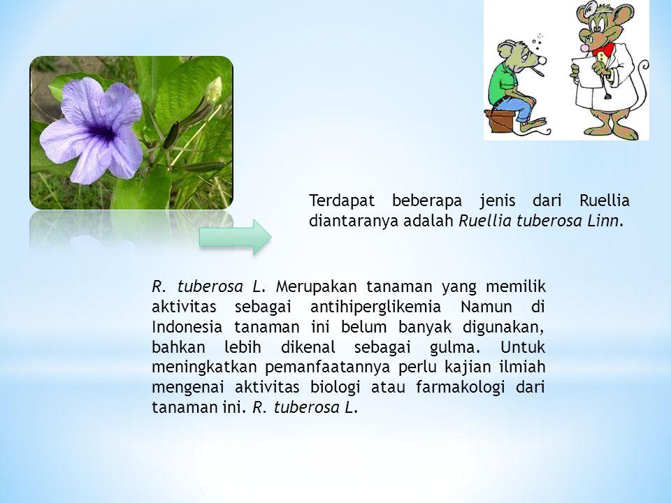 Terdapat beberapa jenis dari Ruellia diantaranya adalah Ruellia tuberosa Linn.
