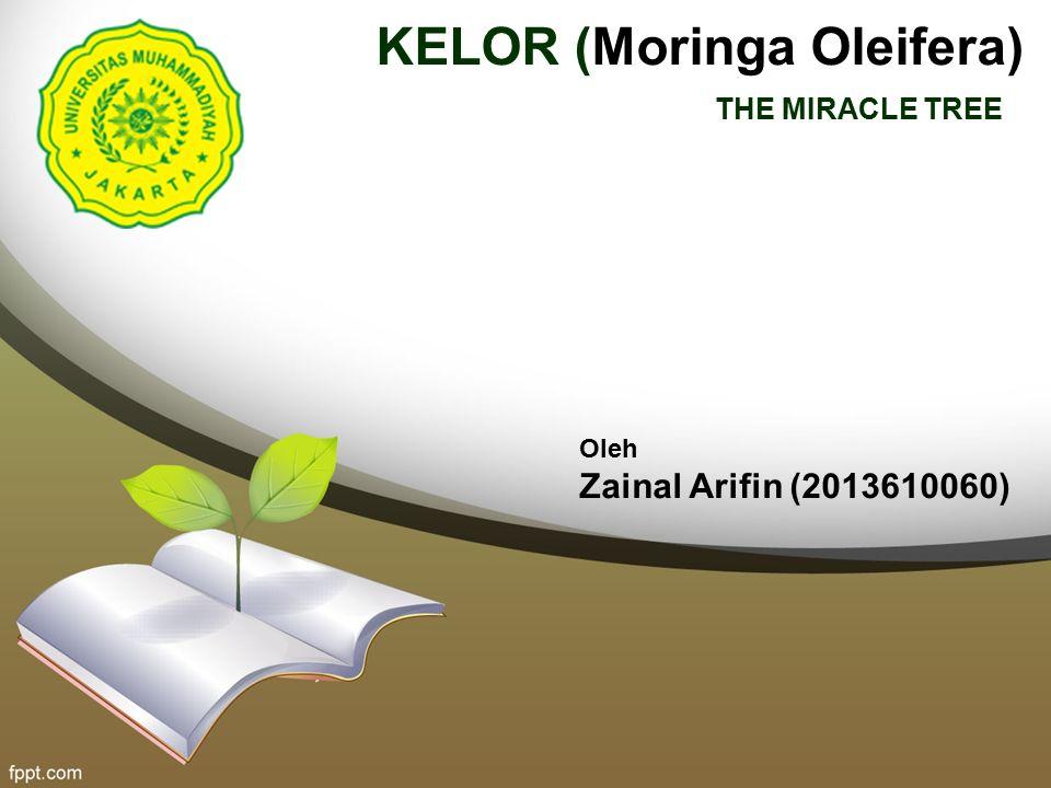 kelor nama latin: Moringa Oleifera nama Indonesia: Kelor nama Inggris: Moringa, Ben-oil tree, Clarifier tree, Drumstick tree tumbuh dalam bentuk pohon, berumur panjang dengan tinggi 7 – 12 m.