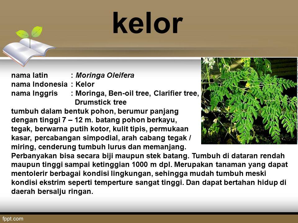 kelor nama latin: Moringa Oleifera nama Indonesia: Kelor nama Inggris: Moringa, Ben-oil tree, Clarifier tree, Drumstick tree tumbuh dalam bentuk pohon