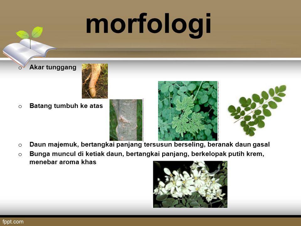 morfologi o Akar tunggang o Batang tumbuh ke atas o Daun majemuk, bertangkai panjang tersusun berseling, beranak daun gasal o Bunga muncul di ketiak d