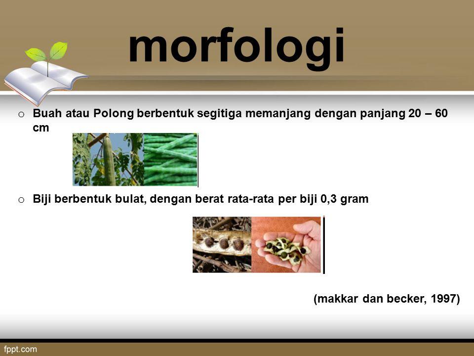 morfologi o Buah atau Polong berbentuk segitiga memanjang dengan panjang 20 – 60 cm o Biji berbentuk bulat, dengan berat rata-rata per biji 0,3 gram (