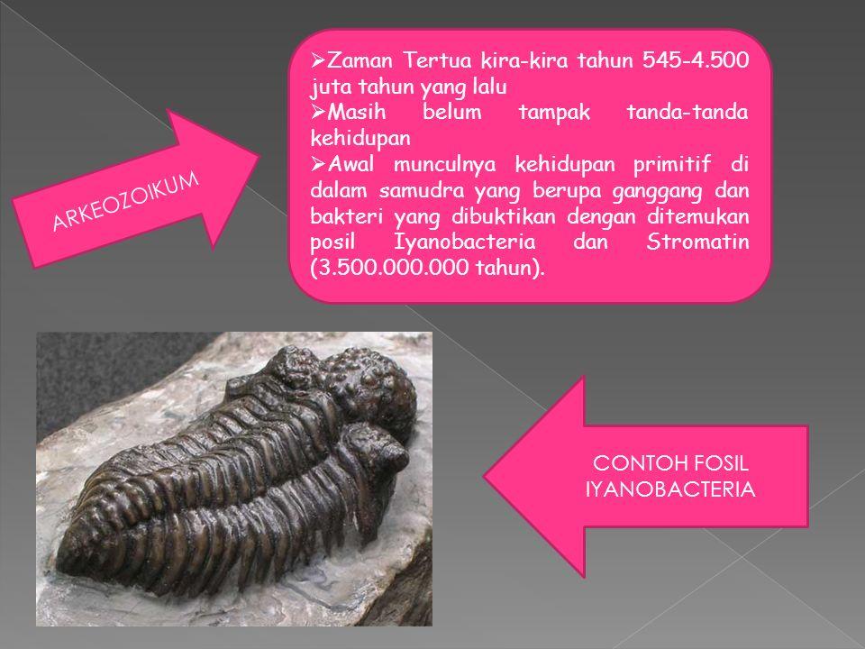 ARKEOZOIKUM  Zaman Tertua kira-kira tahun 545-4.500 juta tahun yang lalu  Masih belum tampak tanda-tanda kehidupan  Awal munculnya kehidupan primitif di dalam samudra yang berupa ganggang dan bakteri yang dibuktikan dengan ditemukan posil Iyanobacteria dan Stromatin (3.500.000.000 tahun).