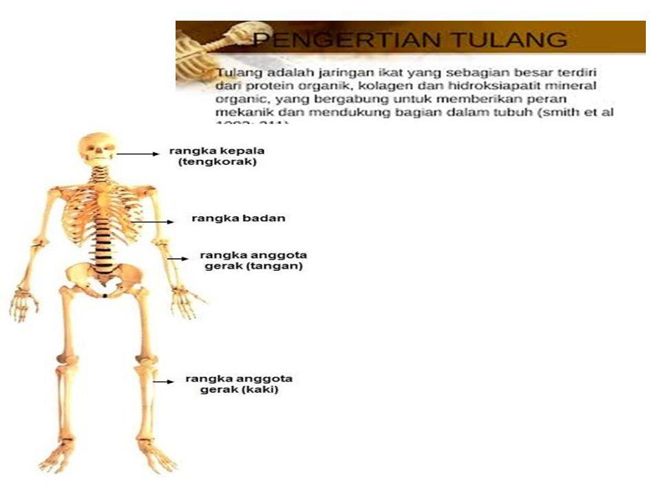 1. Tulang Tengkorak