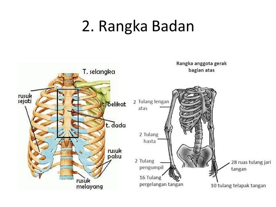 A. Kelainan dan penyakit pada Rangka