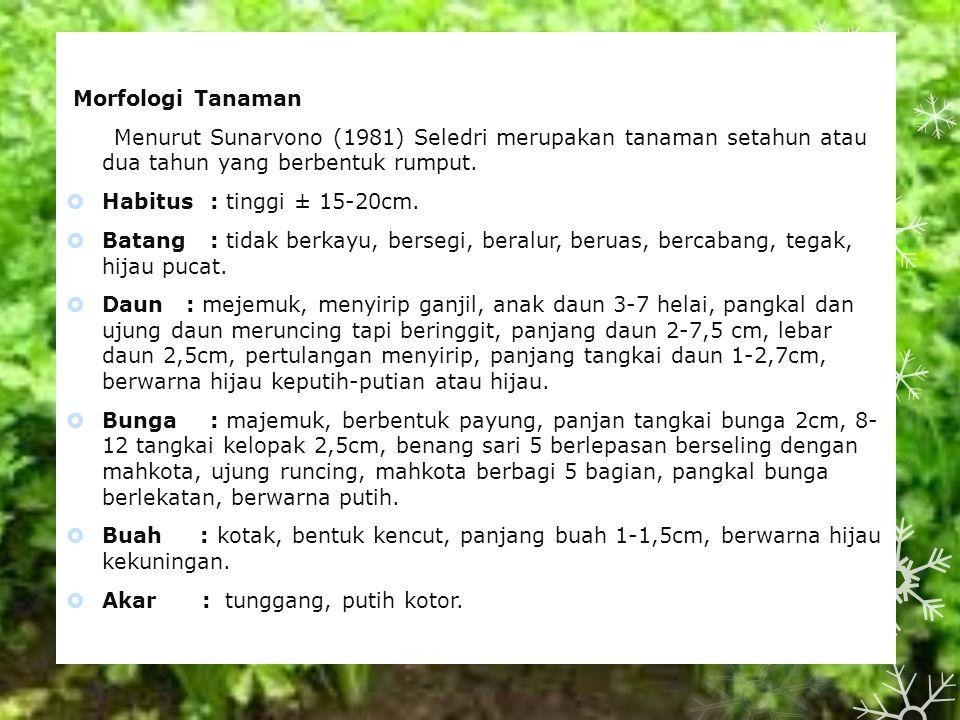 Morfologi Tanaman Menurut Sunarvono (1981) Seledri merupakan tanaman setahun atau dua tahun yang berbentuk rumput.