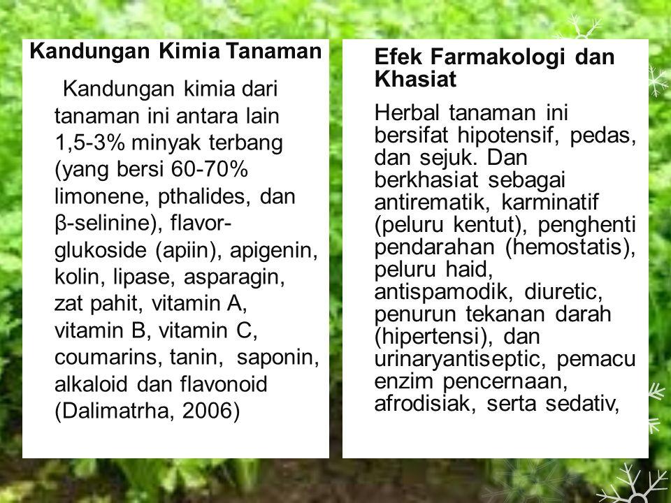Kandungan Kimia Tanaman Kandungan kimia dari tanaman ini antara lain 1,5-3% minyak terbang (yang bersi 60-70% limonene, pthalides, dan β-selinine), flavor- glukoside (apiin), apigenin, kolin, lipase, asparagin, zat pahit, vitamin A, vitamin B, vitamin C, coumarins, tanin, saponin, alkaloid dan flavonoid (Dalimatrha, 2006) Efek Farmakologi dan Khasiat Herbal tanaman ini bersifat hipotensif, pedas, dan sejuk.