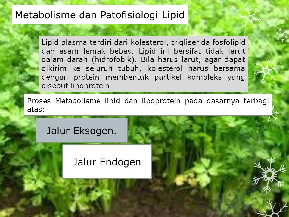 Metabolisme dan Patofisiologi Lipid Lipid plasma terdiri dari kolesterol, trigliserida fosfolipid dan asam lemak bebas.