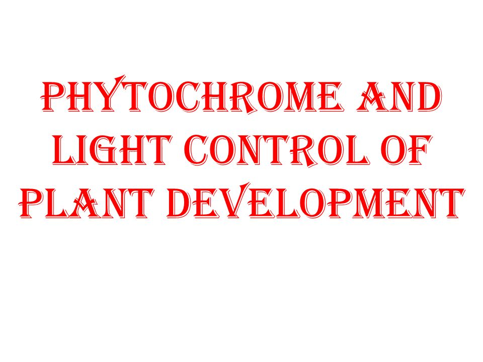 PHYTOCHROME AND LIGHT CONTROL OF PLANT DEVELOPMENT