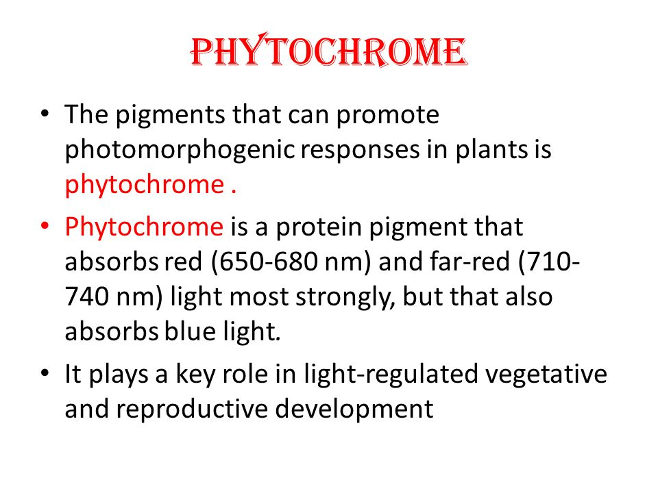 PHYTOCHROME The pigments that can promote photomorphogenic responses in plants is phytochrome. Phytochrome is a protein pigment that absorbs red (650-