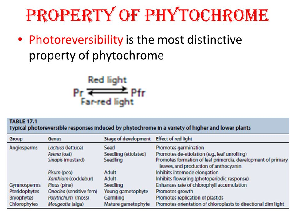 PROPERTY OF PHYTOCHROME Photoreversibility is the most distinctive property of phytochrome