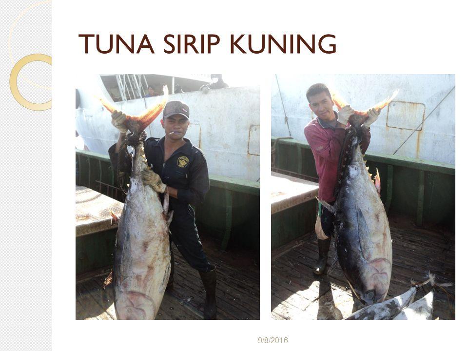 TUNA SIRIP KUNING