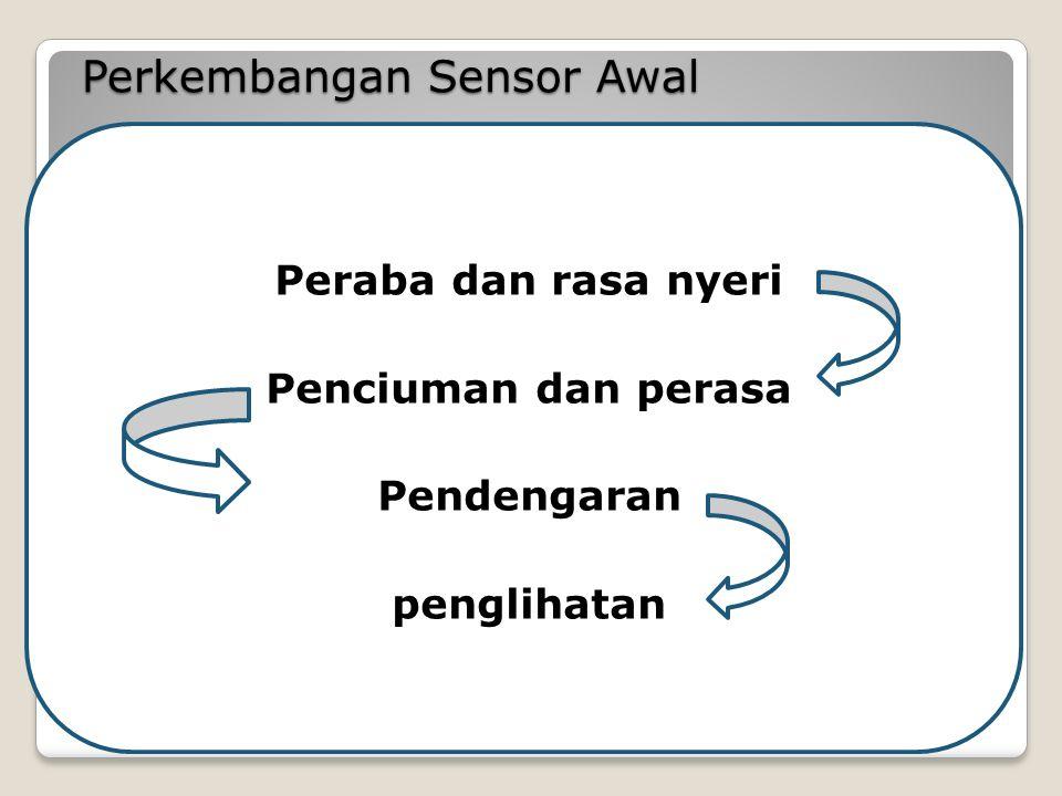 Perkembangan Sensor Awal Peraba dan rasa nyeri Penciuman dan perasa Pendengaran penglihatan