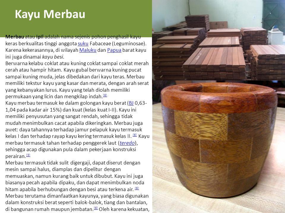 Kayu Merbau Merbau atau ipil adalah nama sejenis pohon penghasil kayu keras berkualitas tinggi anggota suku Fabaceae (Leguminosae). Karena kekerasanny