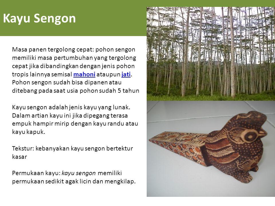 Kayu Sengon Masa panen tergolong cepat: pohon sengon memiliki masa pertumbuhan yang tergolong cepat jika dibandingkan dengan jenis pohon tropis lainny