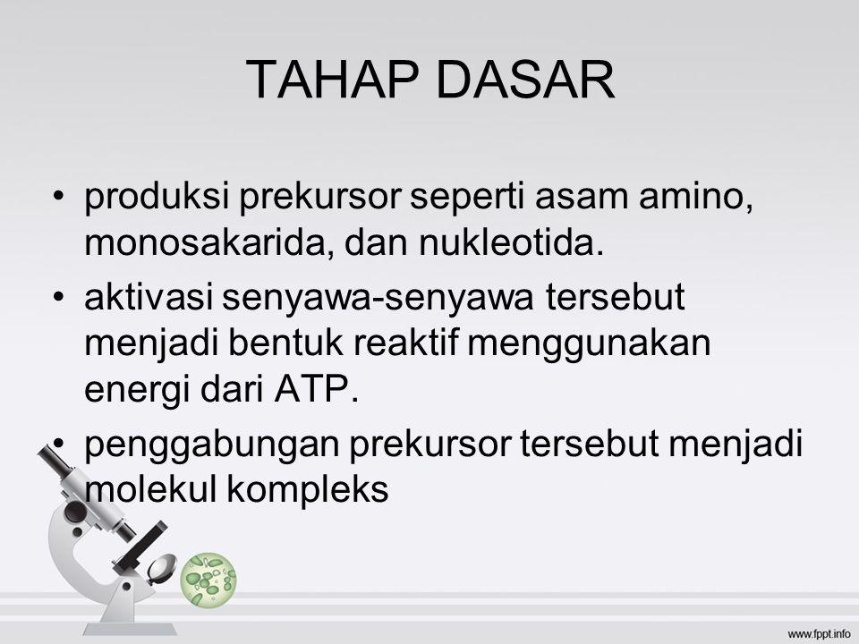 TAHAP DASAR produksi prekursor seperti asam amino, monosakarida, dan nukleotida.