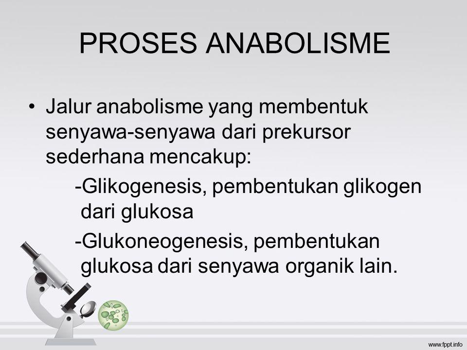 PROSES ANABOLISME Jalur anabolisme yang membentuk senyawa-senyawa dari prekursor sederhana mencakup: -Glikogenesis, pembentukan glikogen dari glukosa -Glukoneogenesis, pembentukan glukosa dari senyawa organik lain.