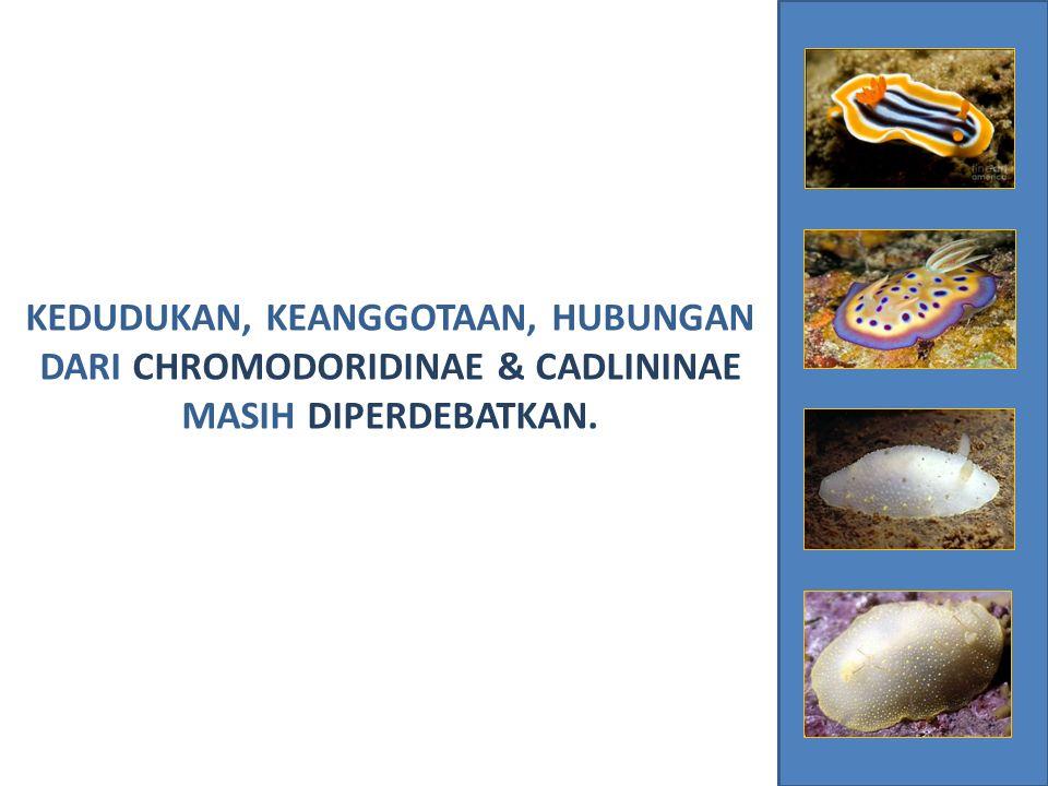 Menguji monofili dari chromodorid monophyly dan memastikan jika Cadlina adalah chromodorid.