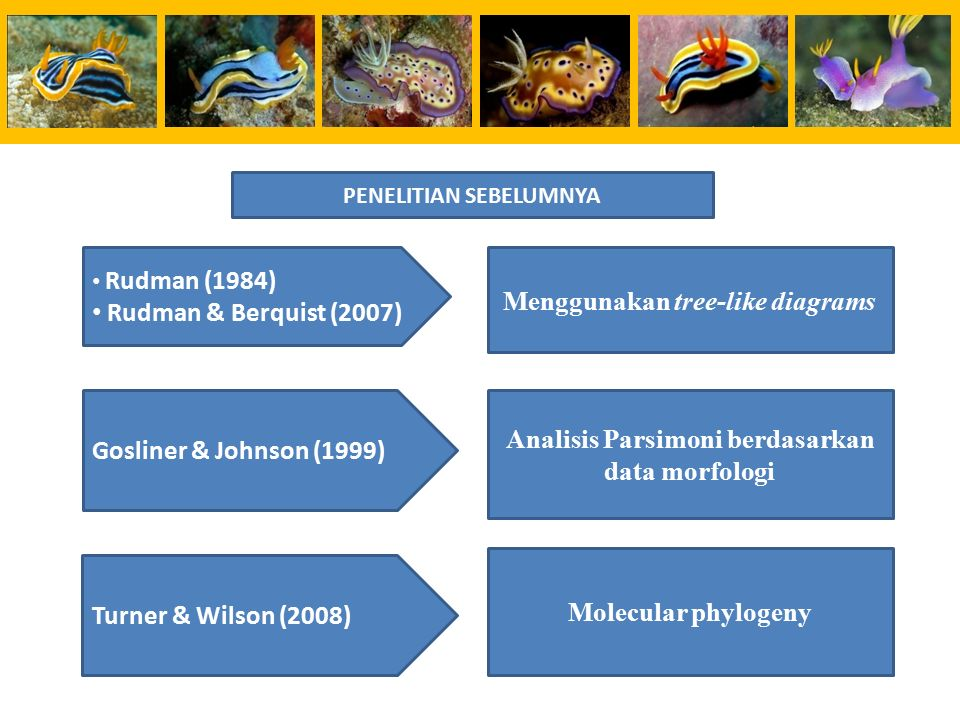 Rudman (1984) Rudman & Berquist (2007) Menggunakan tree-like diagrams Gosliner & Johnson (1999) Analisis Parsimoni berdasarkan data morfologi Molecular phylogeny Turner & Wilson (2008) PENELITIAN SEBELUMNYA