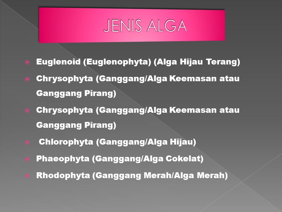  Euglenoid (Euglenophyta) (Alga Hijau Terang)  Chrysophyta (Ganggang/Alga Keemasan atau Ganggang Pirang)  Chlorophyta (Ganggang/Alga Hijau)  Phaeo