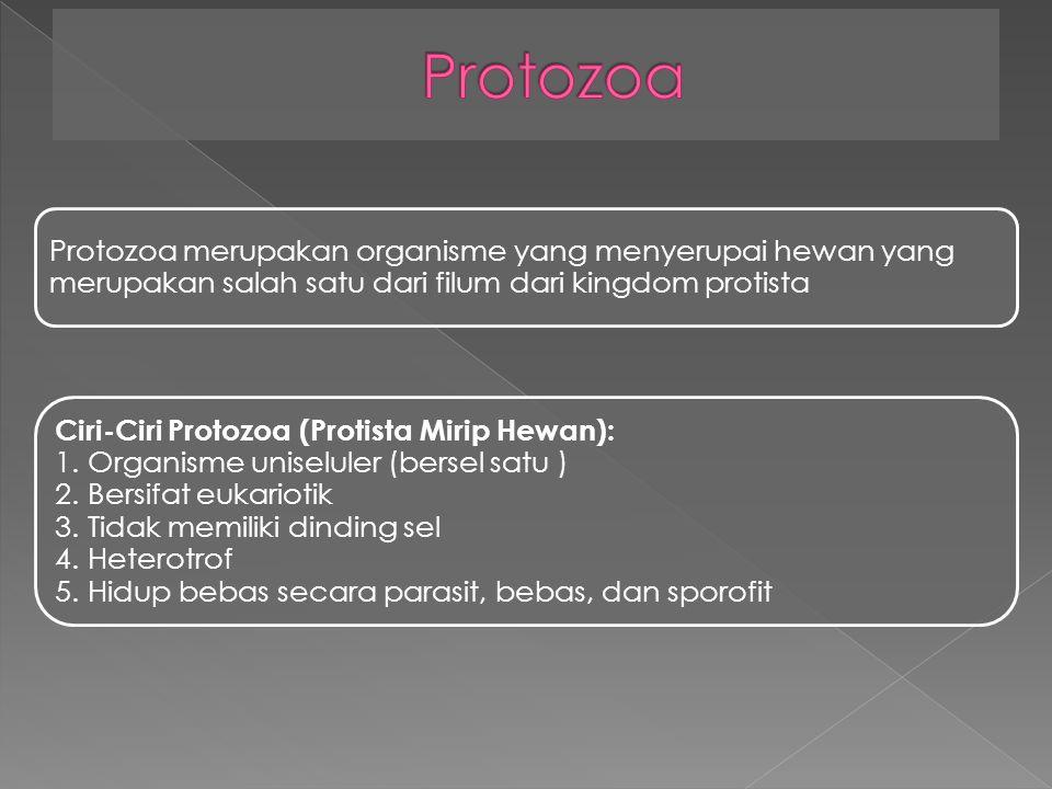 Protozoa merupakan organisme yang menyerupai hewan yang merupakan salah satu dari filum dari kingdom protista Ciri-Ciri Protozoa (Protista Mirip Hewan