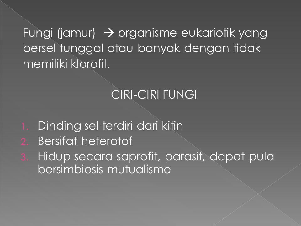 Fungi (jamur)  organisme eukariotik yang bersel tunggal atau banyak dengan tidak memiliki klorofil. CIRI-CIRI FUNGI 1. Dinding sel terdiri dari kitin