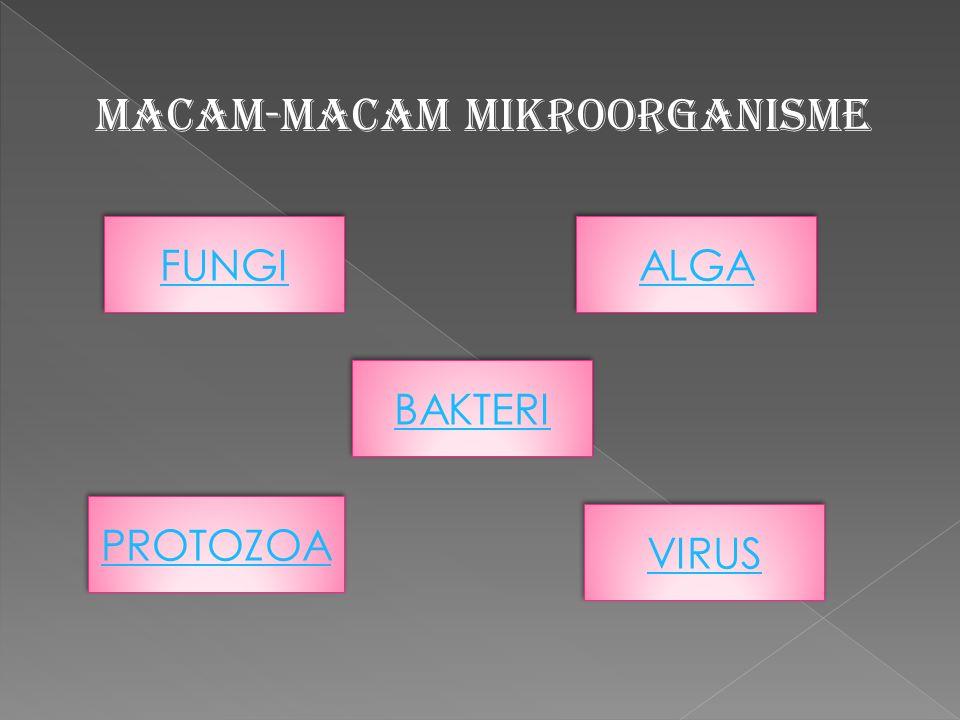 MACAM-MACAM MIKROORGANISME FUNGI FUNGI ALGA ALGA PROTOZOA PROTOZOA VIRUS VIRUS BAKTERI BAKTERI
