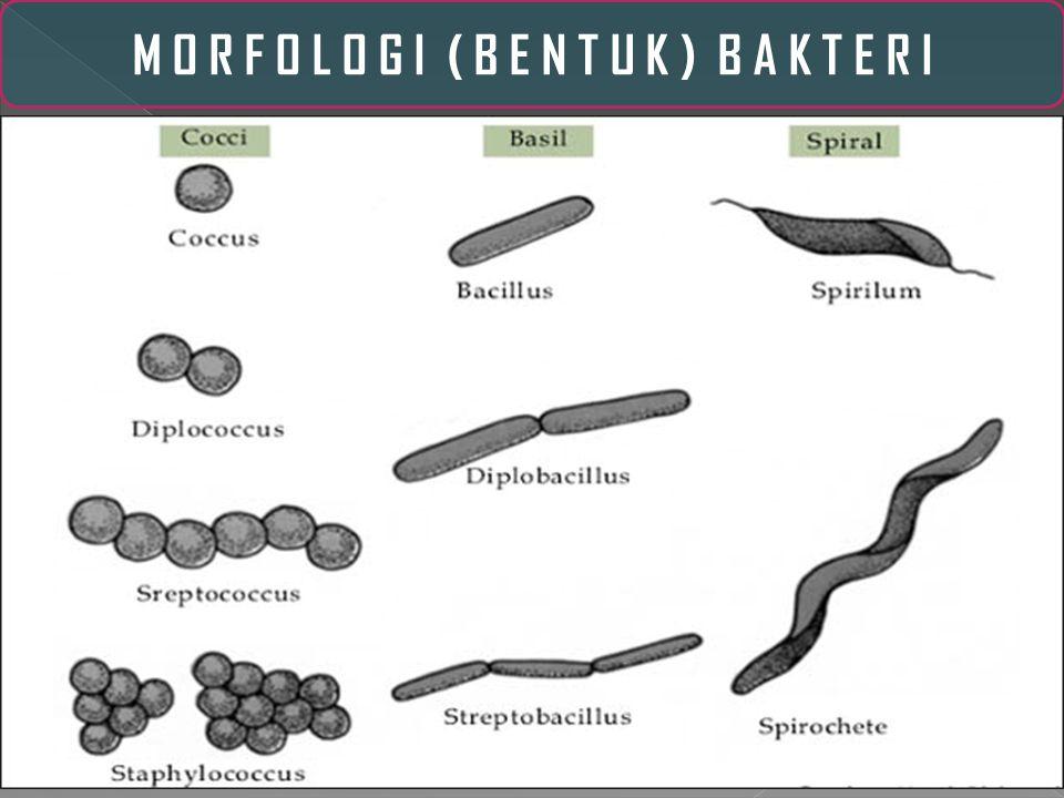 1.Multiselluler 2. Prokariot (tidak memiliki membran inti sel ) 3.