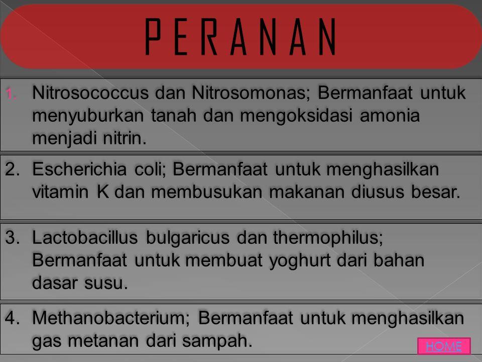  Nitrosococcus dan Nitrosomonas; Bermanfaat untuk menyuburkan tanah dan mengoksidasi amonia menjadi nitrin. P E R A N A N 2.Escherichia coli; Berman