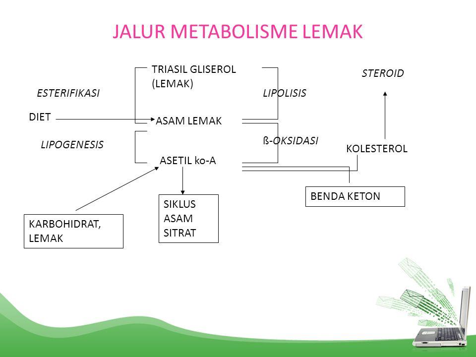 JALUR METABOLISME LEMAK TRIASIL GLISEROL (LEMAK) ASAM LEMAK ASETIL ko-A SIKLUS ASAM SITRAT ESTERIFIKASI LIPOGENESIS KARBOHIDRAT, LEMAK LIPOLISIS ß-OKS