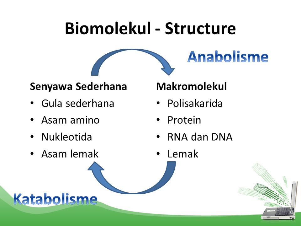 Biomolekul - Structure Senyawa Sederhana Gula sederhana Asam amino Nukleotida Asam lemak Makromolekul Polisakarida Protein RNA dan DNA Lemak