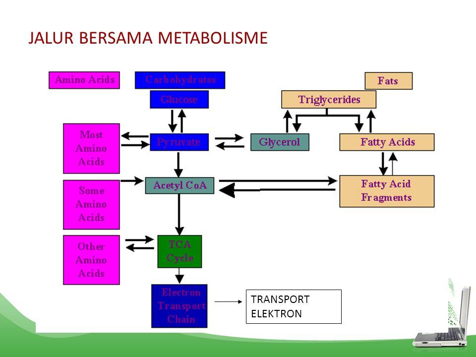 JALUR BERSAMA METABOLISME TRANSPORT ELEKTRON