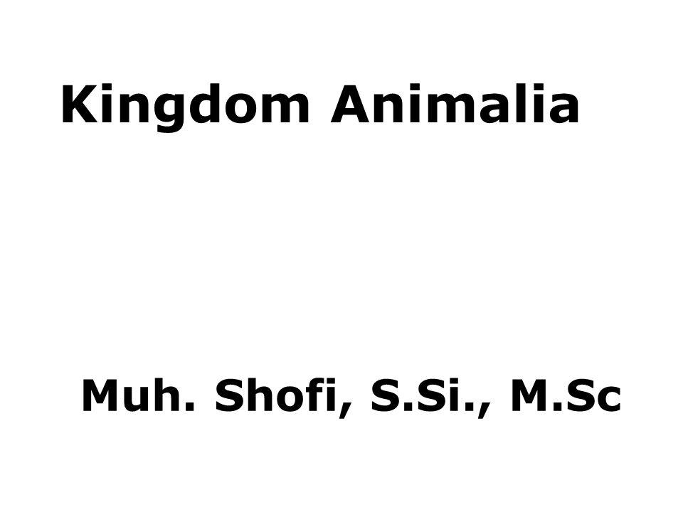 Klasifikasi Annelida 3.Hirudinea (Cacing tidak berambut) Lintah (Hirudo medicinalis)