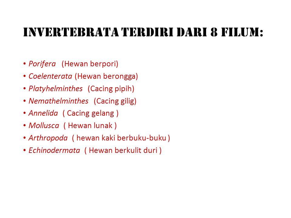 A. Avertebrata Tidak bertulang belakang 1.