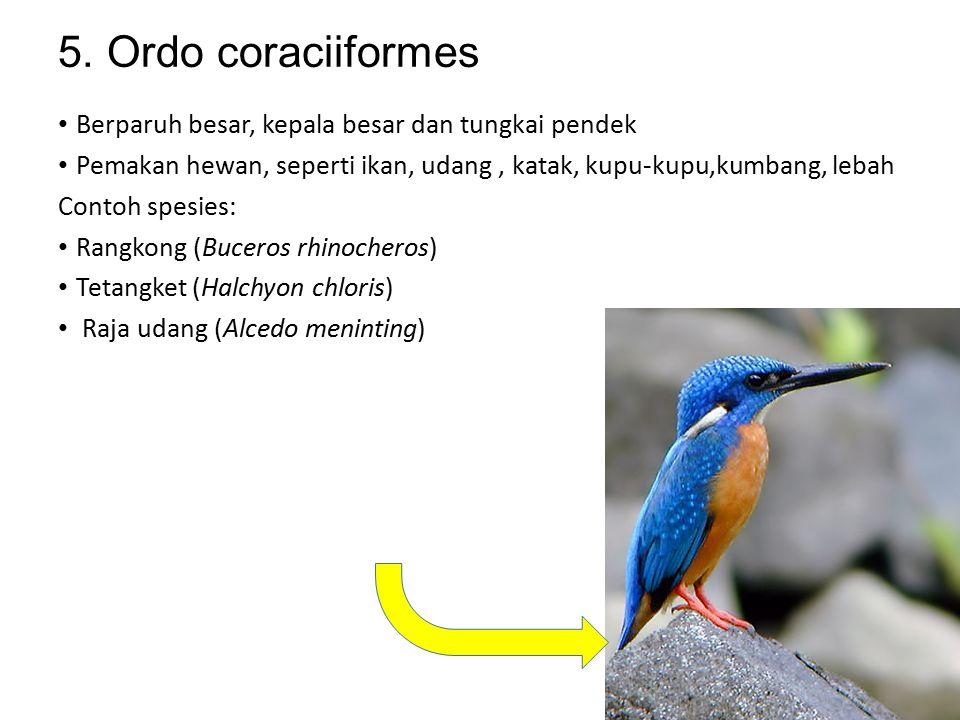 4. Ordo ciconiiformes Berkepala botak; memiliki paruh, leher, dan tungkai panjang Hidup bergrombol memakan hewan air Contoh spesies: Blekok (Ardeola s